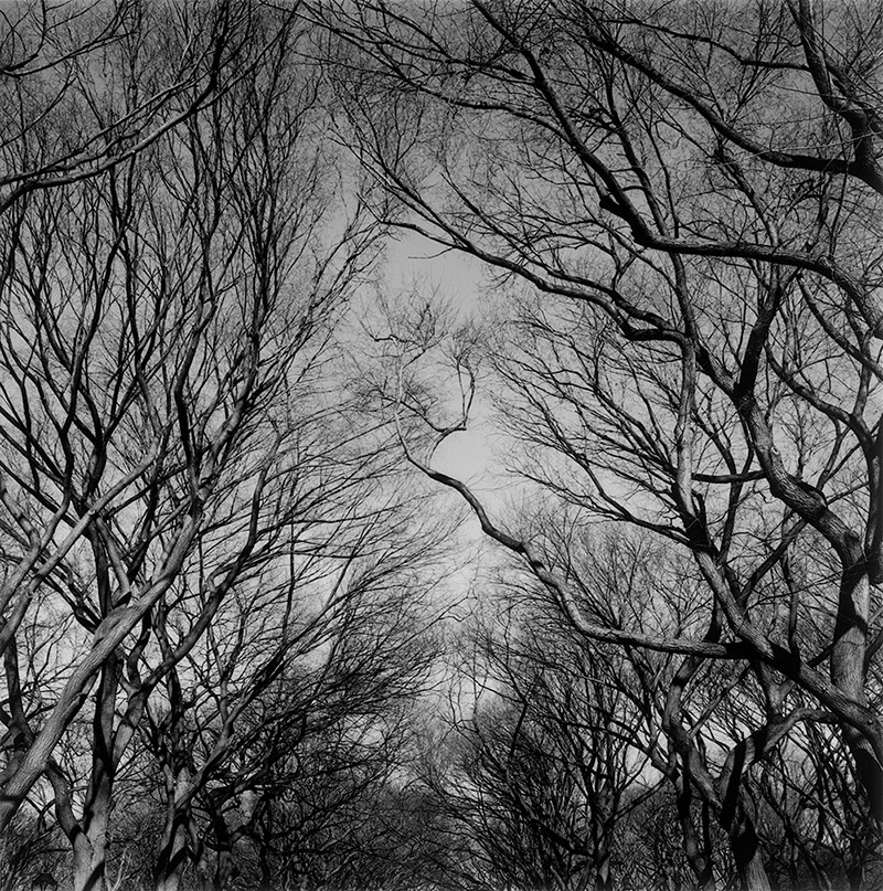 Central-Park-Trees